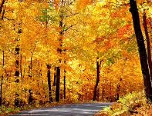 Important November Dates/ Fechas Importantes de noviembre